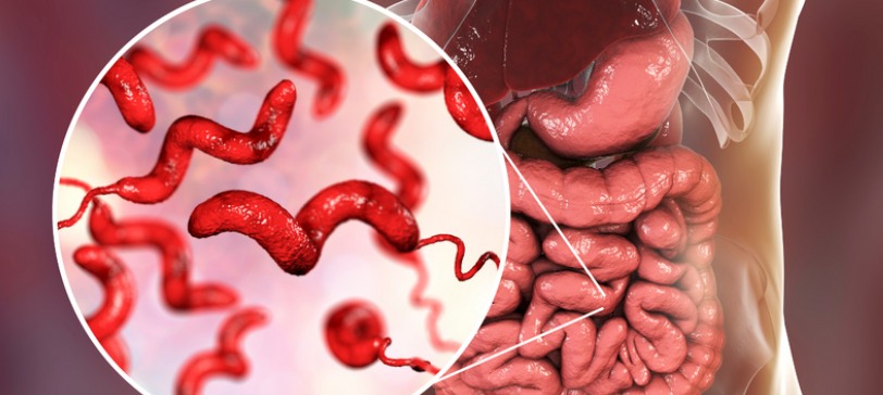 Researchers Discover Protein May Block Nauseating Bacteria